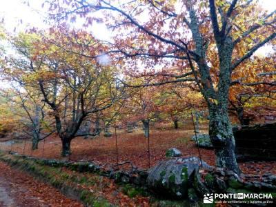 Senda Viriato; Sierra San Vicente; cercanias madrid rutas montes del pais vasco bujaruelo huesca
